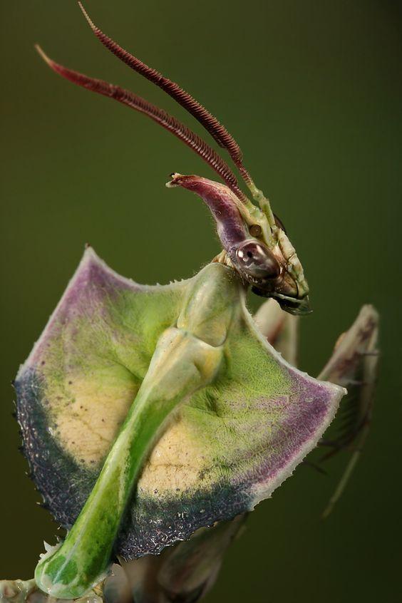 """Mante """"Fleur du Diable"""" de dos"""